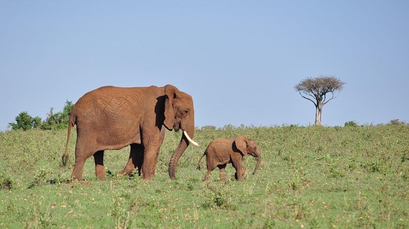 Кения 5Z4EE Слоны
