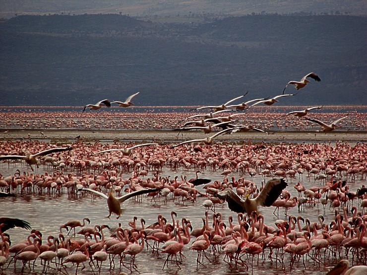 Кения 5Z4LS Национальный Парк Фламинго
