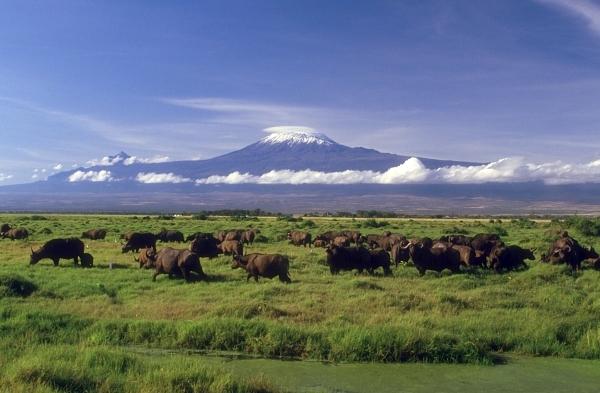 Килиминджаро Кения 5Z4EE