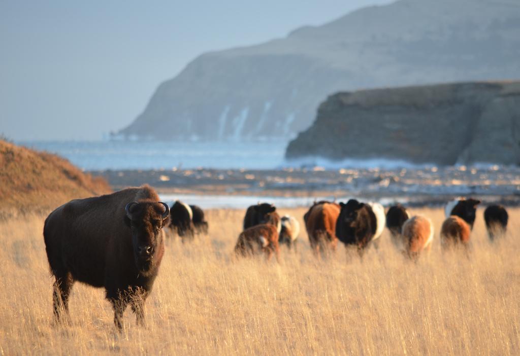 Kodiak Island KL7RRC/P Alaska DX News
