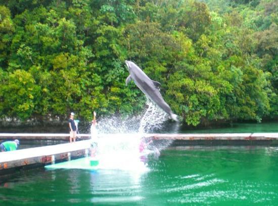 Koror Island T88ZO DX News