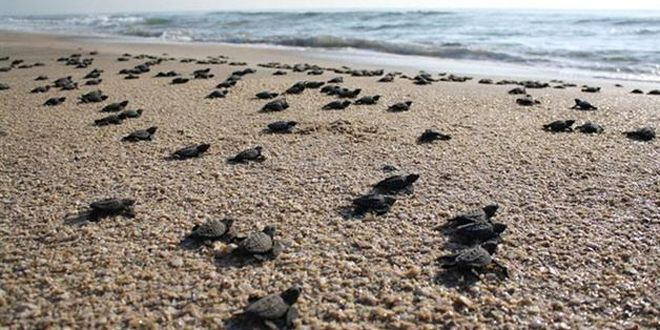 La Tortuga Island YW5D DX News