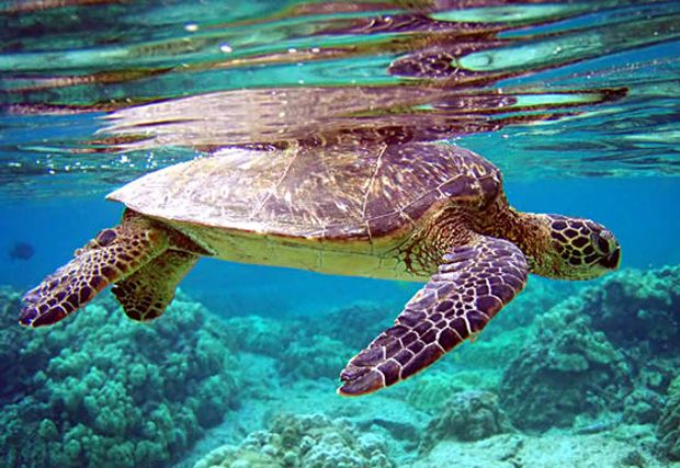 La Tortuga Island YW5D IOTA DX News