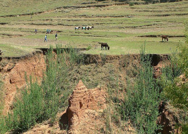 Lesotho 7P8ID DX News