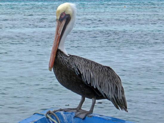 Острова Лос Рокес YW5LR