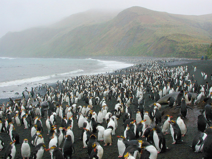 Macquarie Island VK0TH