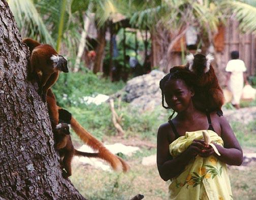 Мадагаскар Остров 5R8HT