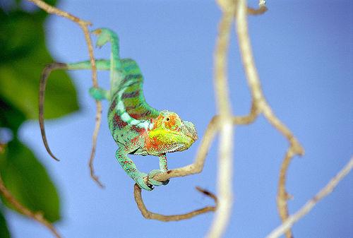 Мадагаскар 5R8RJ