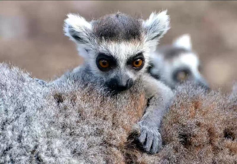 Madagascar Island 5R8UO DX News
