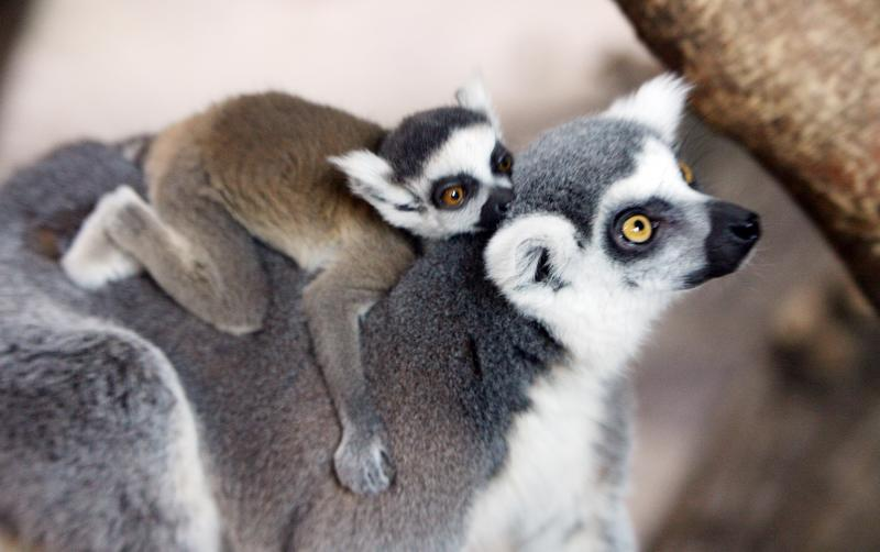 Madagascar Island 5R8X