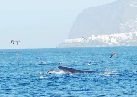 Madeira Island CR3L CQ WW DX RTTY Contest 2010