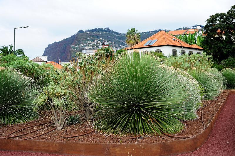 Madeira Island CT9/DL3KWR CT9/DL3KWF