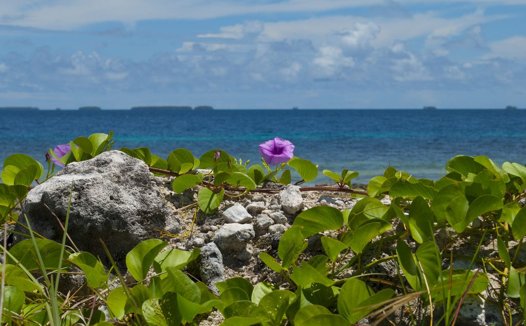 Majuro Atoll Marshall Islands V73MW DX News