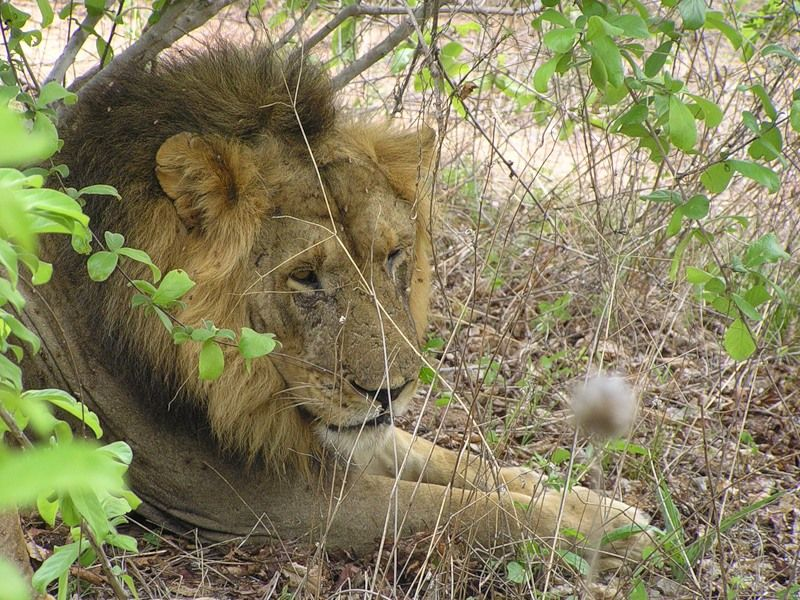 Malawi 7QNL