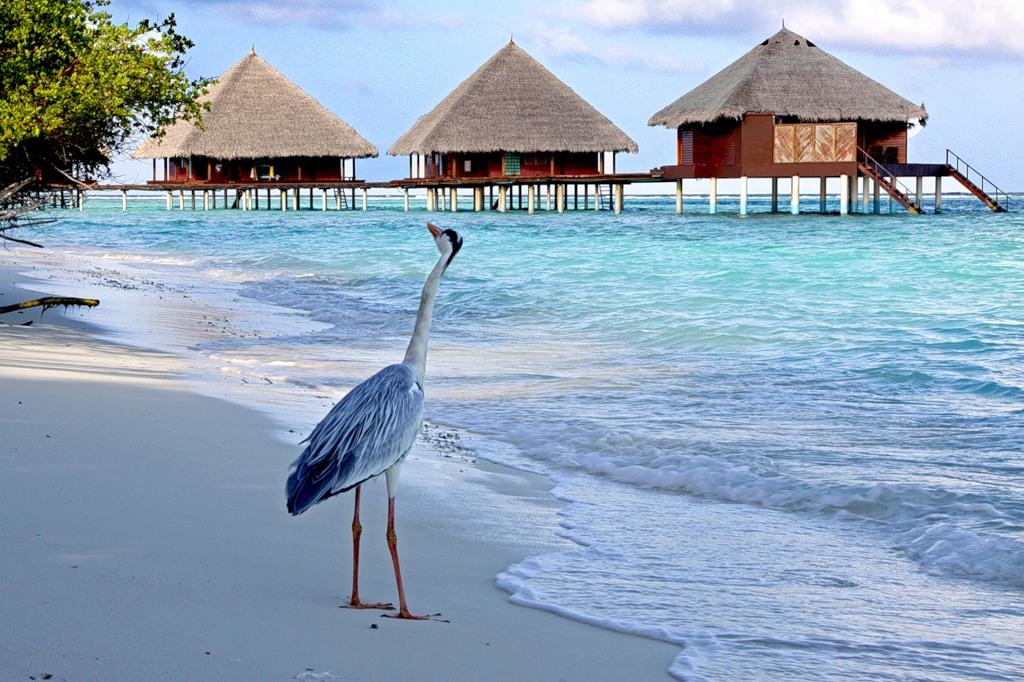 Maldive Islands 8Q7HF 8Q7MH
