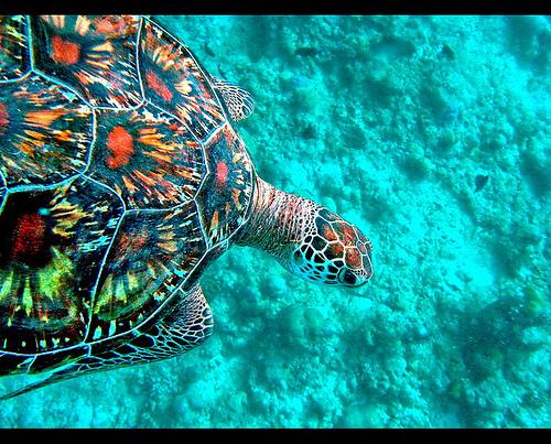 Maldive Islands 8Q7TH