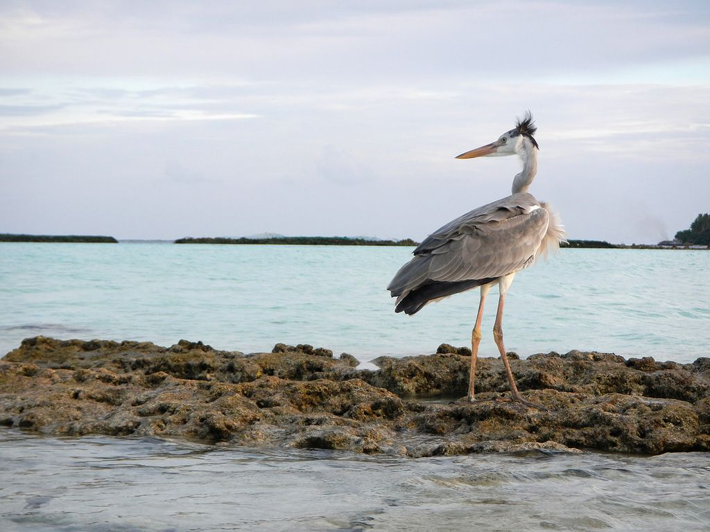 Мальдивские острова 8Q7SM