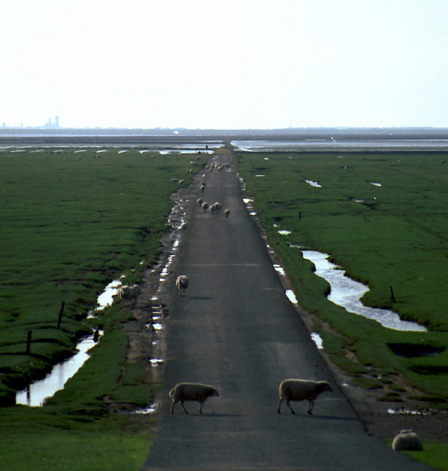 Mando Island