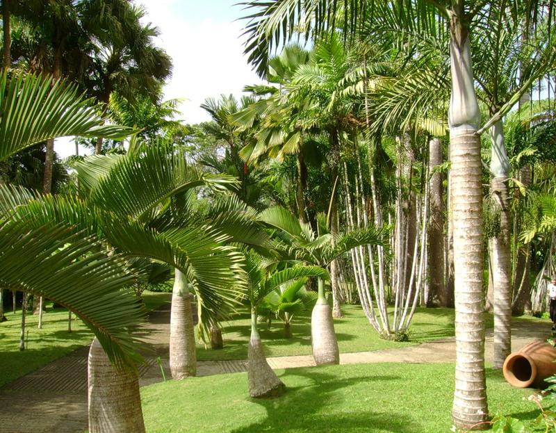 Остров Мартиника TO5PX