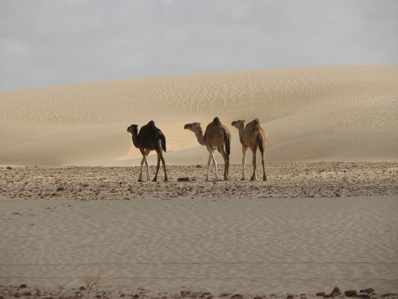Mauritania 5T5BV DX News