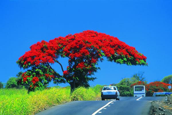 Mauritius Island 3B8/F1BCS DX News 2012