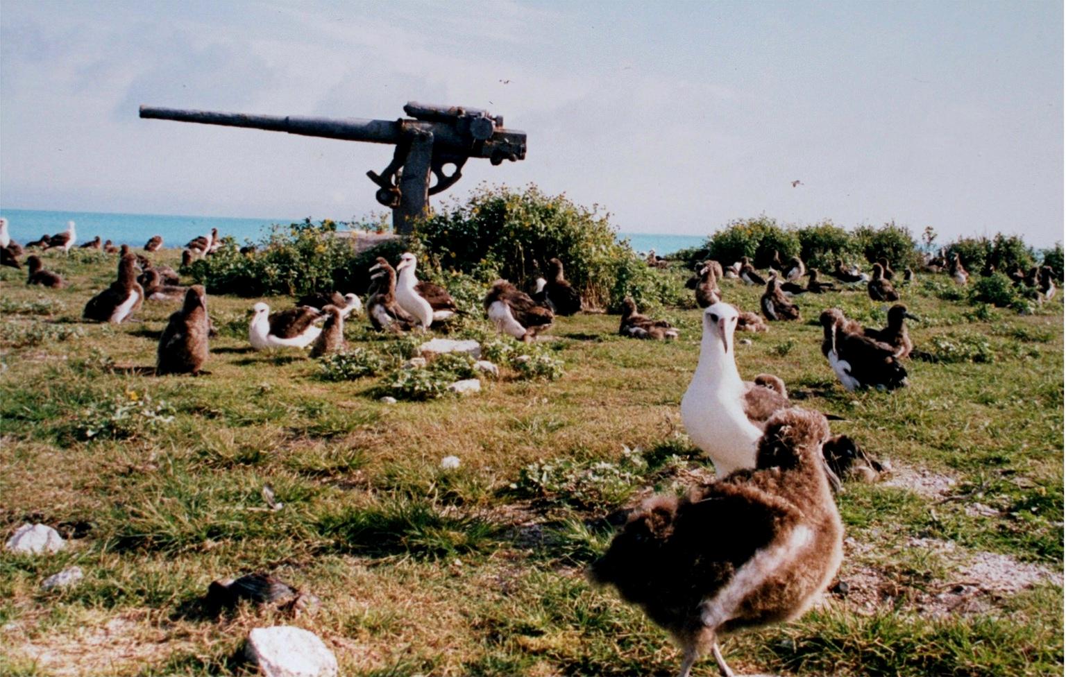 Midway Island KH4/W5FJG