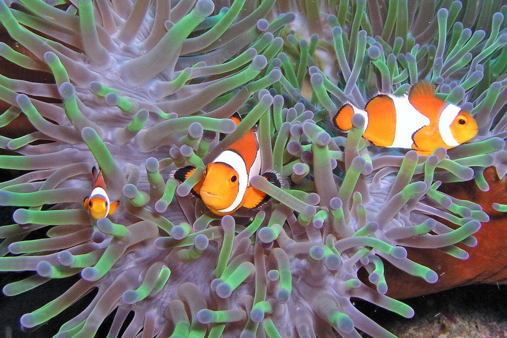 Остров Минданао DU9/DK2PR
