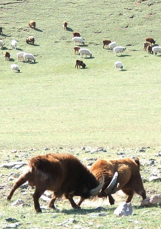 Монголия JT7WFF