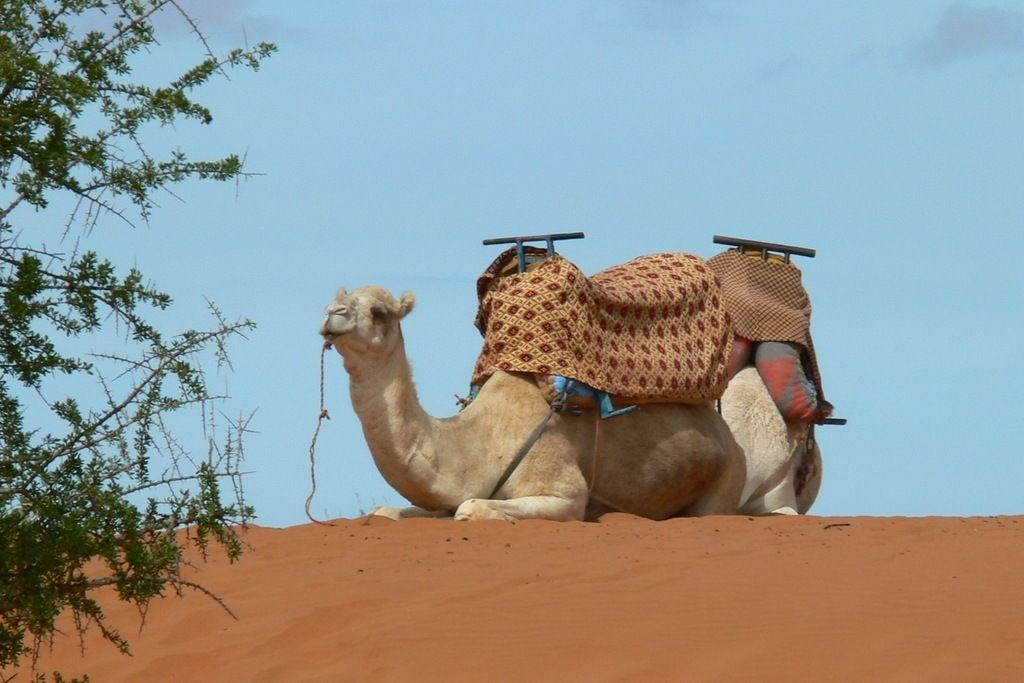Марокко CN2CL