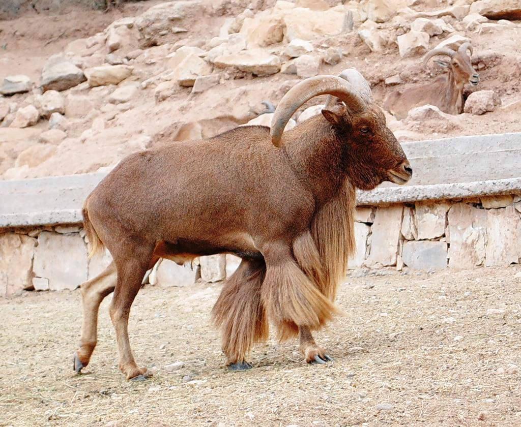 Марокко CN2LO Животные