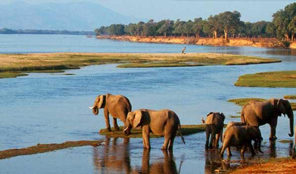 Долина Реки Замбези Мозамбик C95WH Слоны