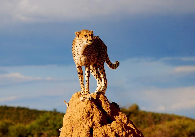 Намибия DX Новости V5/DJ4SO Гепард