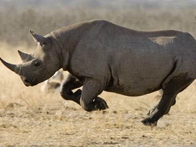 Намибия DX Новости V5/DK1CE Черный Носорог