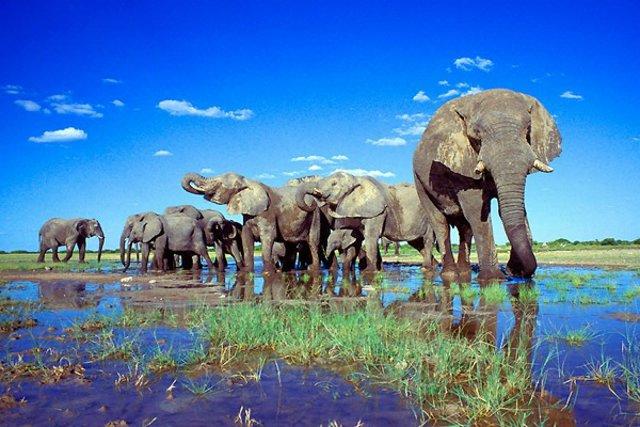 Namibia V5/DF2UU V55V/P V55V DX News