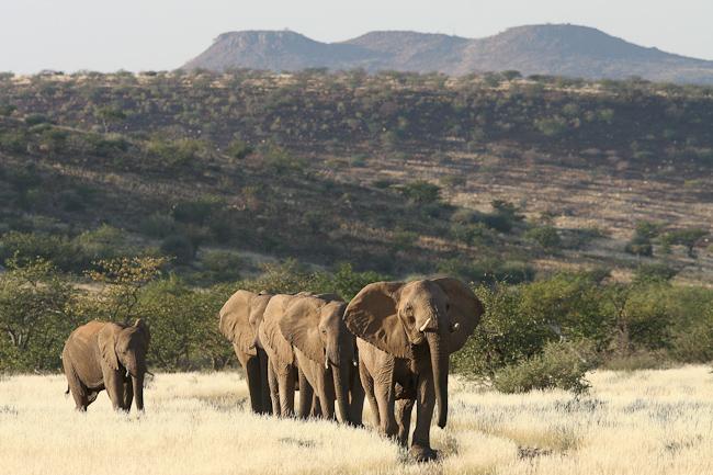 Namibia V5/DJ4SO Elephants