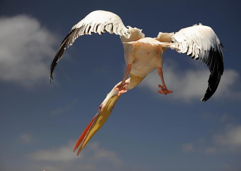 Намибия V5/DJ4SO Пеликан