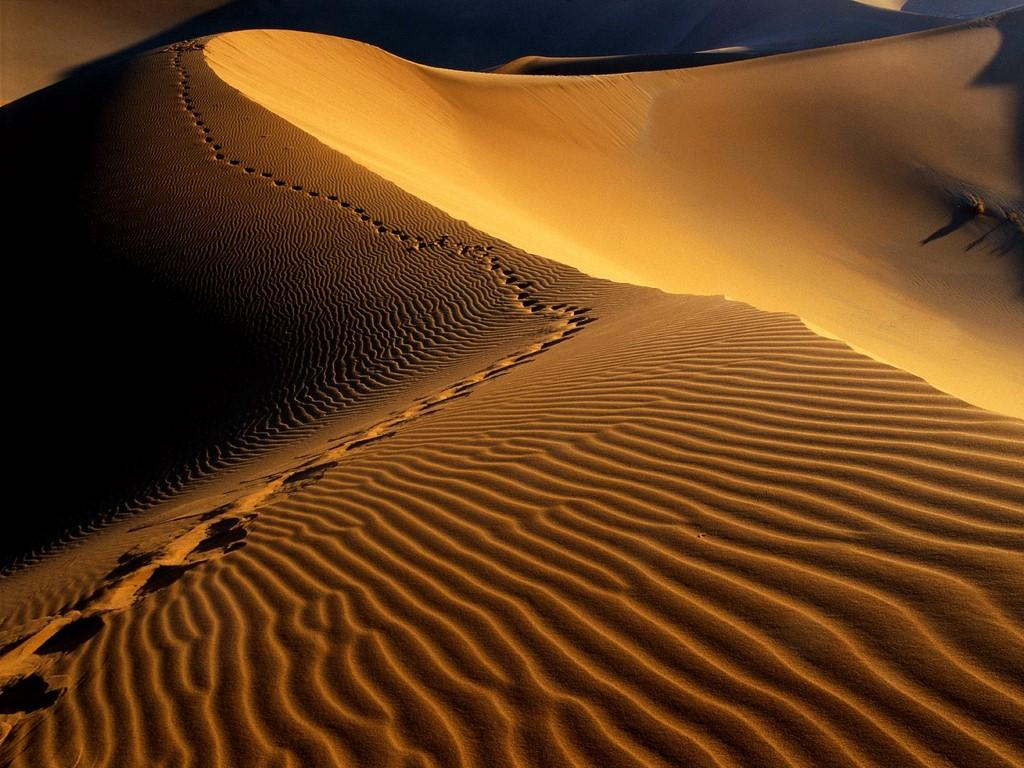Намибия V5/DK1CE Следы на песке