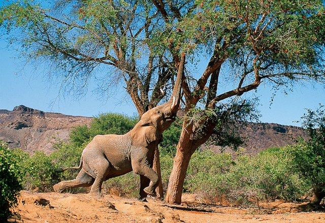 Намибия V5/F5JWH