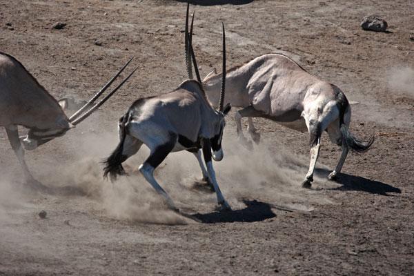 Namibia V5/HB9PHJ