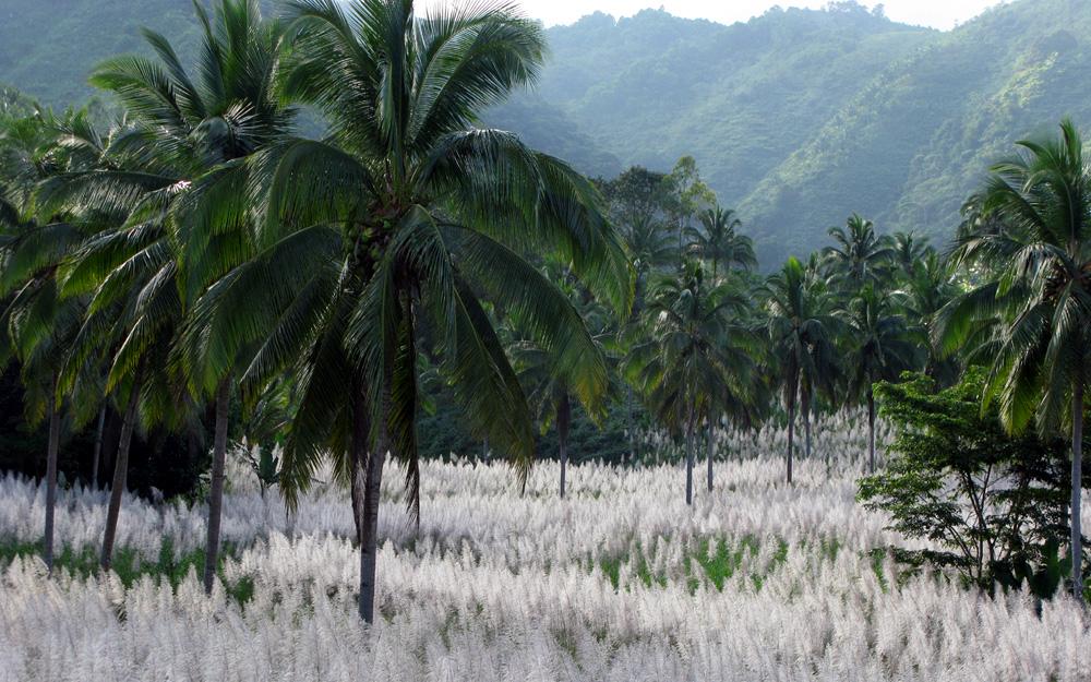 Остров Негрос Филиппины DU7/N7ET Белая Трава