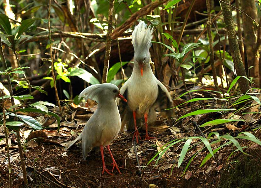 New Caledonia DX News FK/DL2NUD FK/DL9GRE