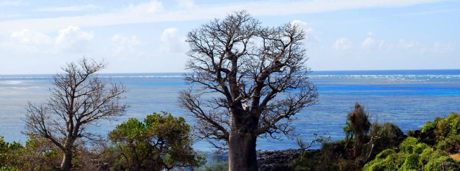 Остров Нгазиджа Коморские острова D64K