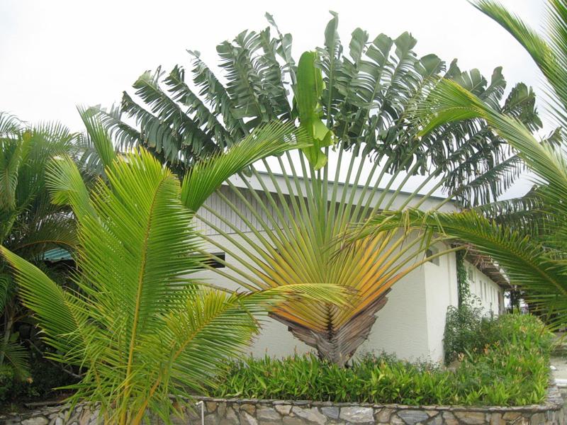 Nicaragua YN2CC 2012 DX News
