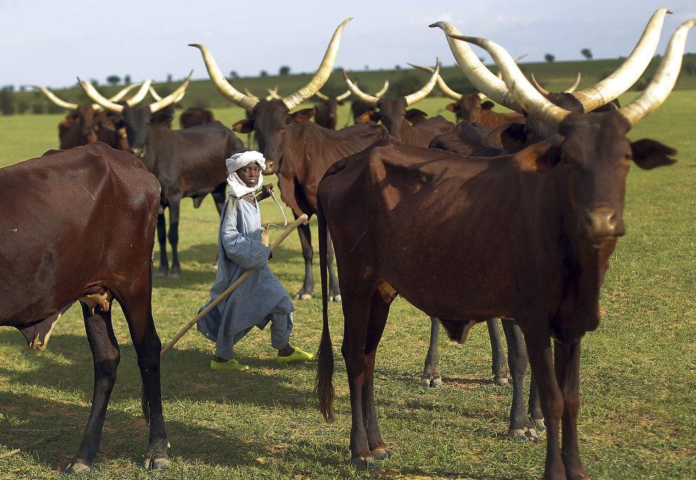 Нигер 5U9AMO