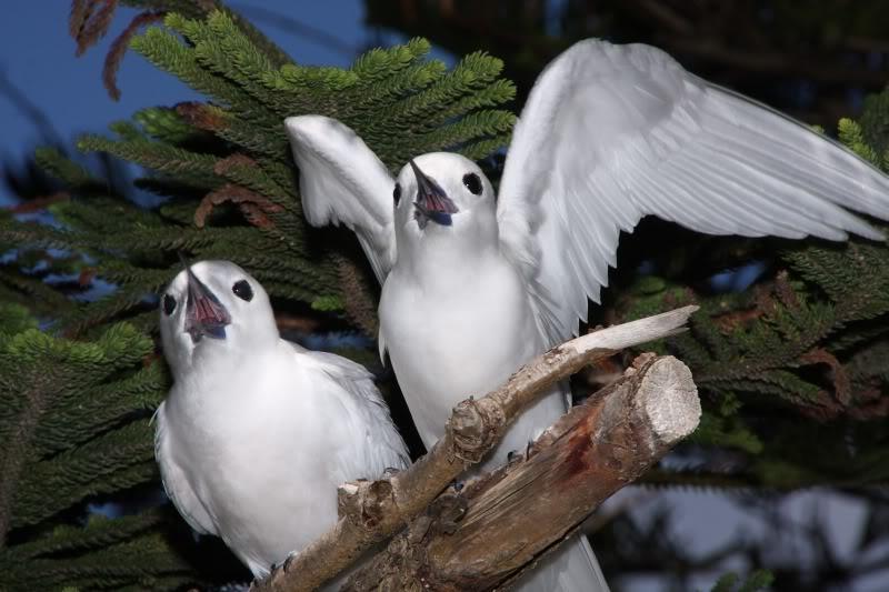 Norfolk Island VK9NN DX News