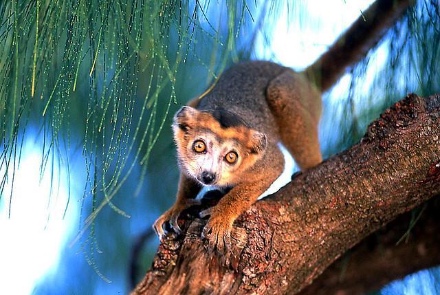 Nosy Be Island Madagascar 5R8IO