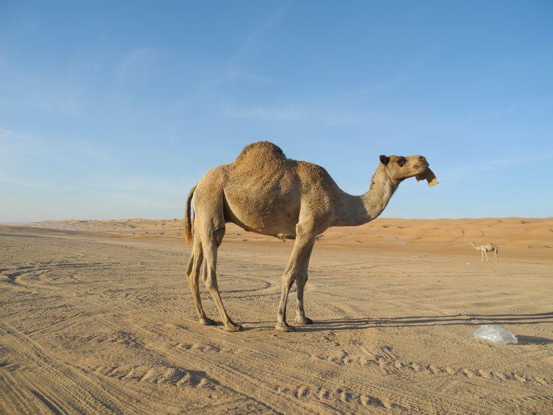 Oman A42A