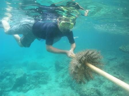 Palau Island T88QQ Star Fish