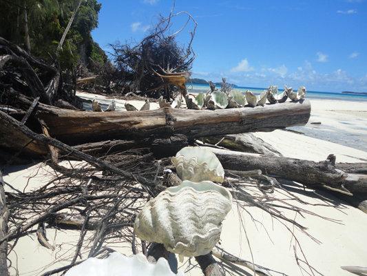 Palau Islands T88KF DX News