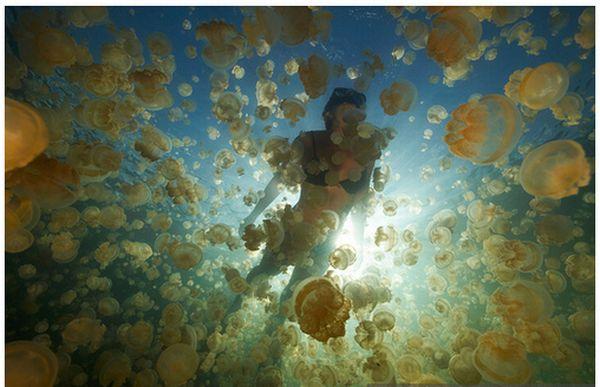 Палау T88KH Озеро медуз